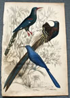 Bird of Paradise Color Print