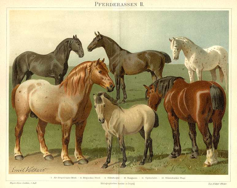 HORSES NEOPOLITAN BELGIAN CLYDESDALE DALES PONY 1894 Chromolithograph