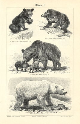 BEARS AND OTHER MAMMALS