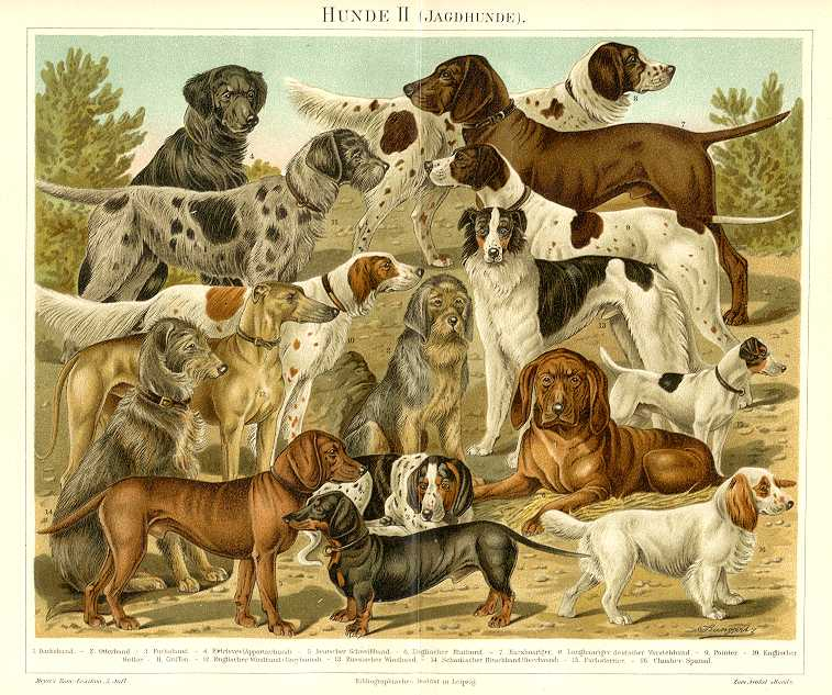 HOUNDS - DOG,HUNDE,1894 Original Antique Chromolithograph