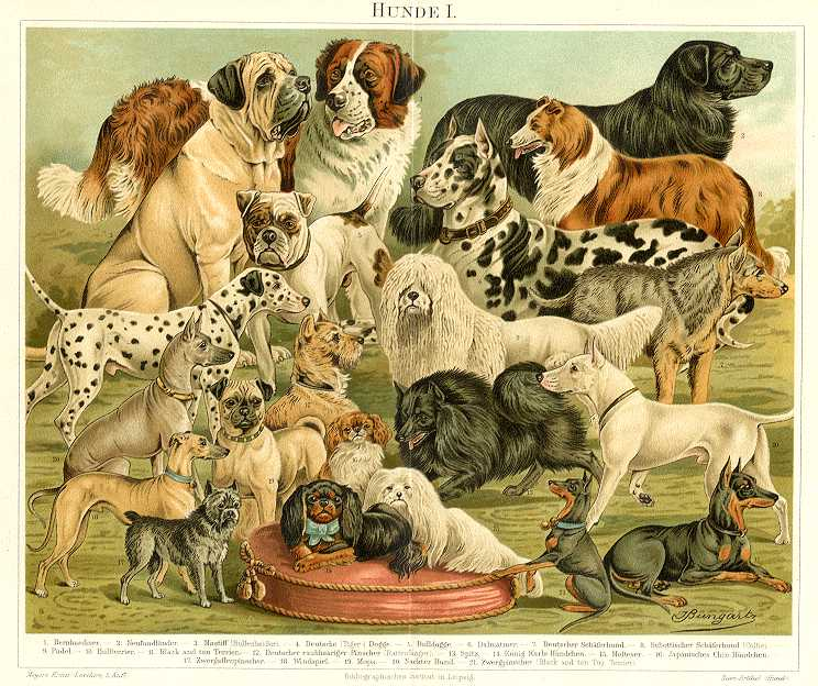 DOGS,HOUNDS,HUNDE,1894 Original Antique Chromolithograph