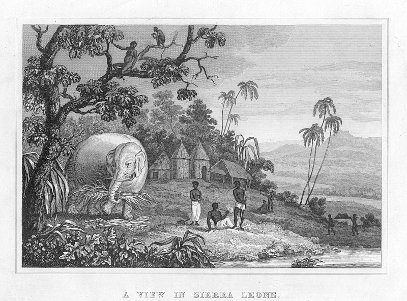 SIERRA LEONE VIEW,Elephant Working,1835 Antique Print